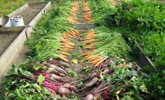 Les jardins partagés : une solution pour les citadins en manque de verdure